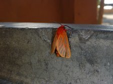 Little moth at the washing-up basins