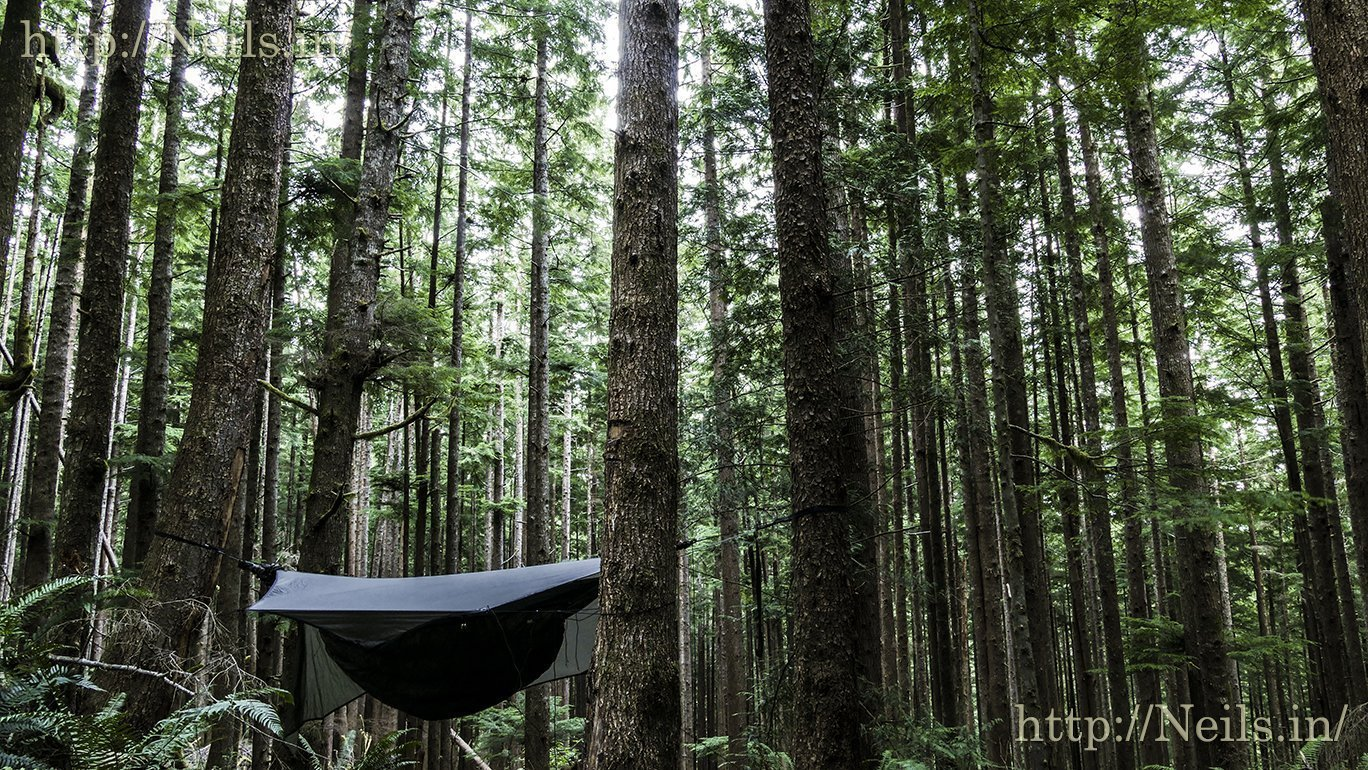 Hanging hammock in the Hoh National Forest